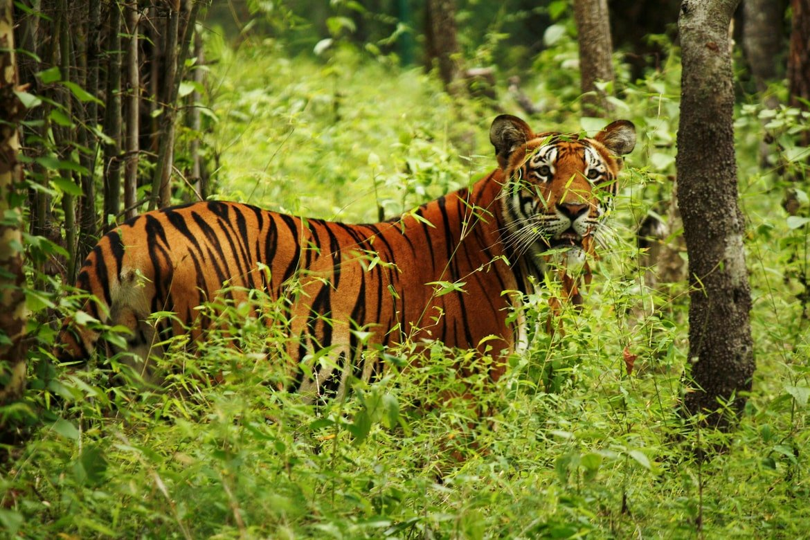 Best Places for Jungle Safari in Nepal