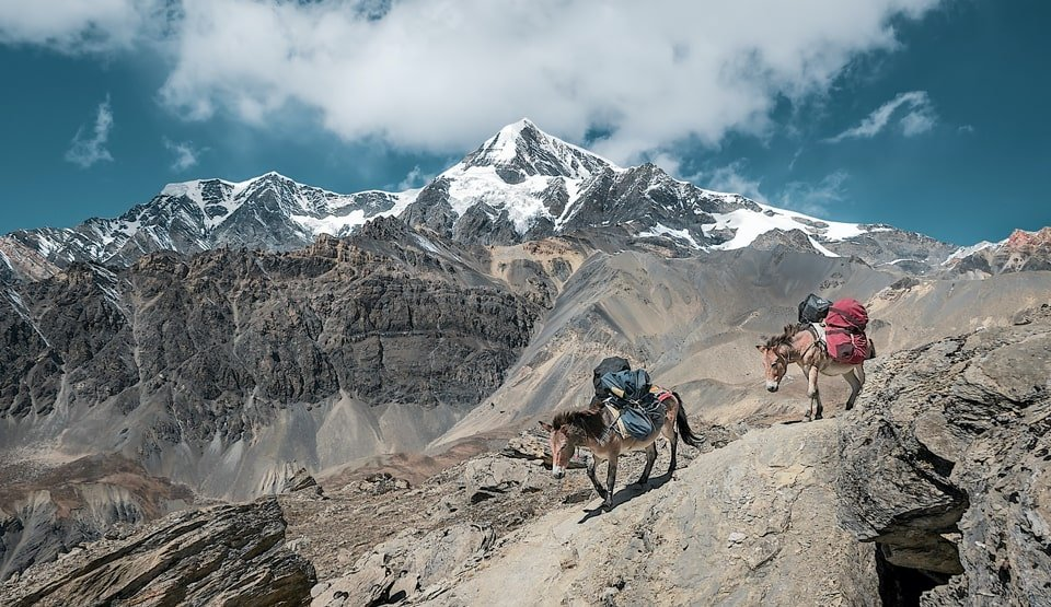 trekking in nepal with horses