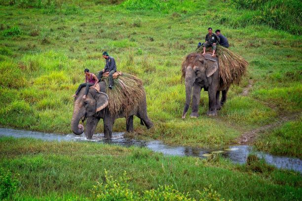 Chitwan National Park in Nepal